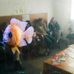 A Fish is hoovering in the air in a doctors office waiting room