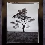 Quinn´s Tree, Tom Boetcher