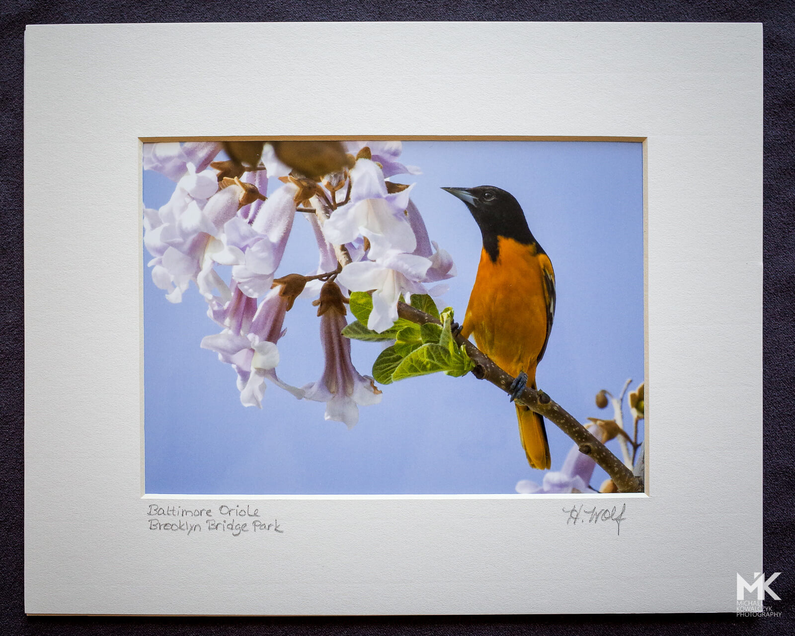 Brooklyn Oriole, Heather Wolf