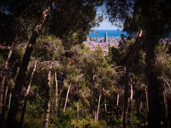 Barcelona coastline, dense forest trees glade, mountain woods, park Guinardo, torre agbar