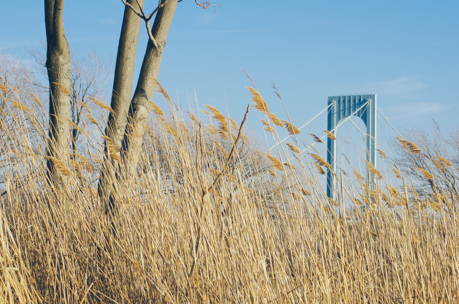 One pillar of the Bronx Whitestone Bridge behind a tree and grass of the the Ferry Point Park, New York City