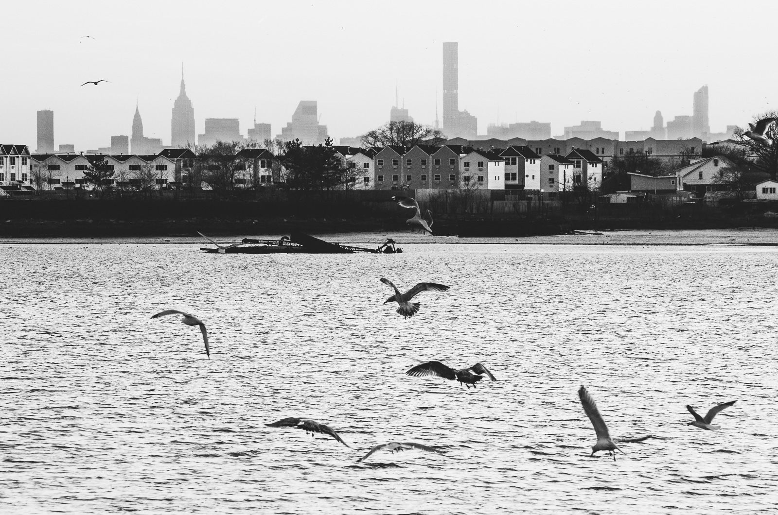 Seagulls fighting for food over the East River