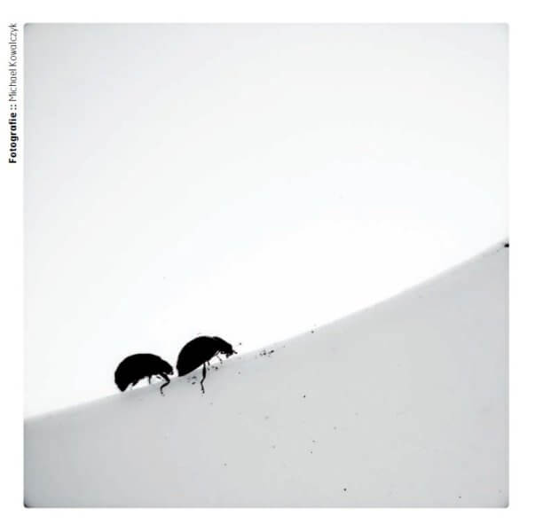 LUUPS-Aachen-2012-Beetle-Road-Michael-Kowalczyk-Photography-1