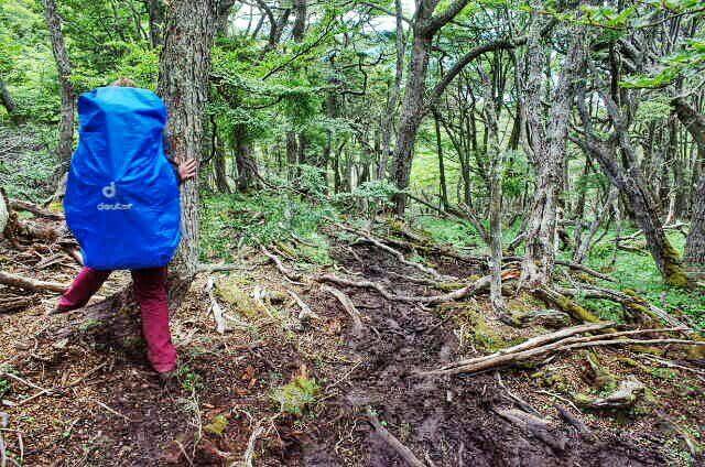 Dientes de Navarino Trekking Forrest Wood Descend