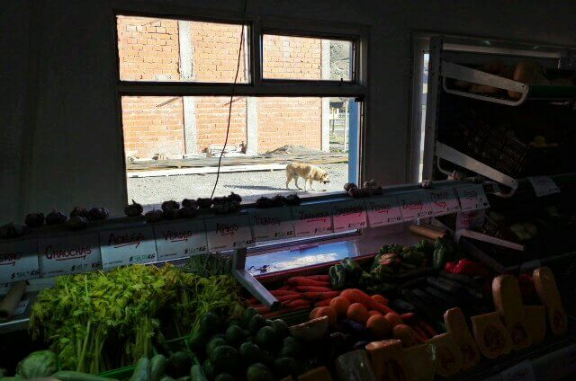 vegetables store dog behind window